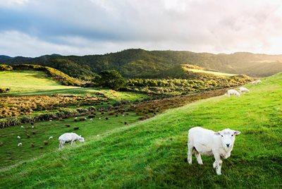 Landsbygd dating NZ