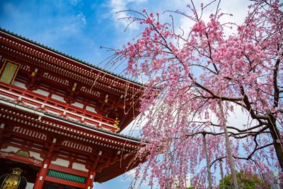 Dating anpassade i Japan