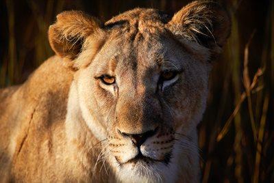 Cougar dating hem sida Sydafrika
