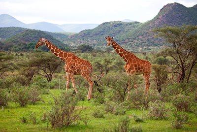 Online Dating savann