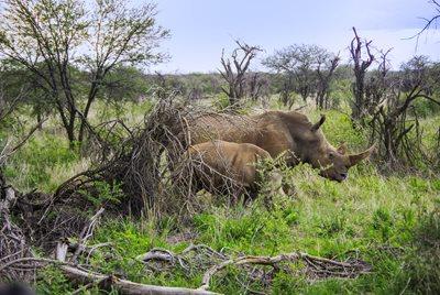 Hittades efter 12 dagar i bushen